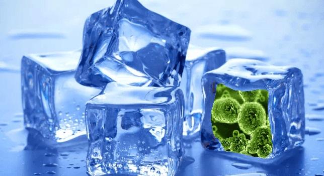 bacteria on ice